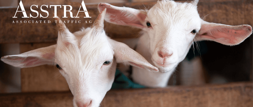 AsstrA Transportation - Transportation of goats from Spain to Russia